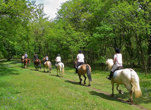 Horse Riding in Osimo